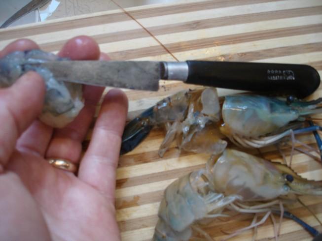 shrimp 083
