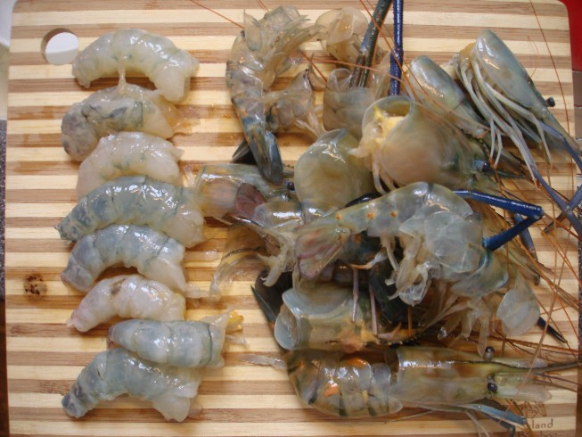 shrimp 086